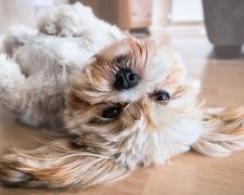 Haustierhaltung im Alter: Welches Haustier passt zu mir?