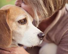 Achtung Giftköder: Lebensgefahr für Hunde